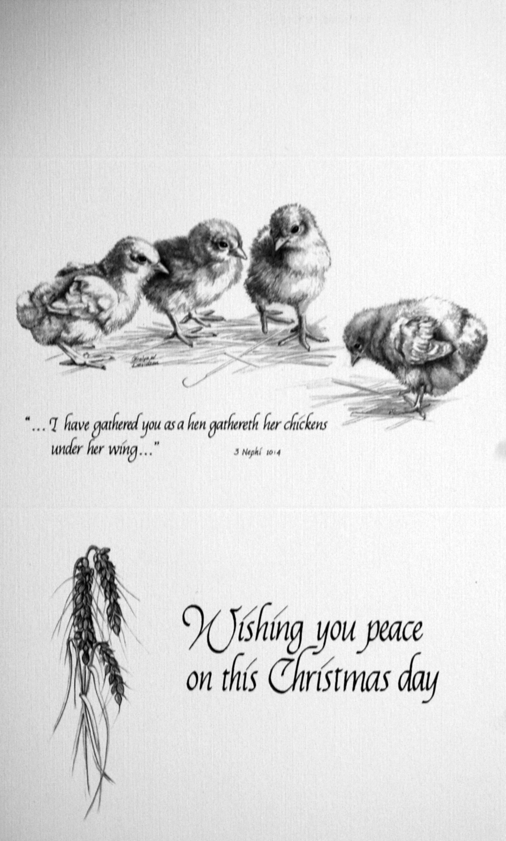 """...I have gathered you as a hen gathereth her chickens under her wing..""   -3 Nephi 10:4-     ""Wishing you peace on this Christmas day""      ( Chicks)"