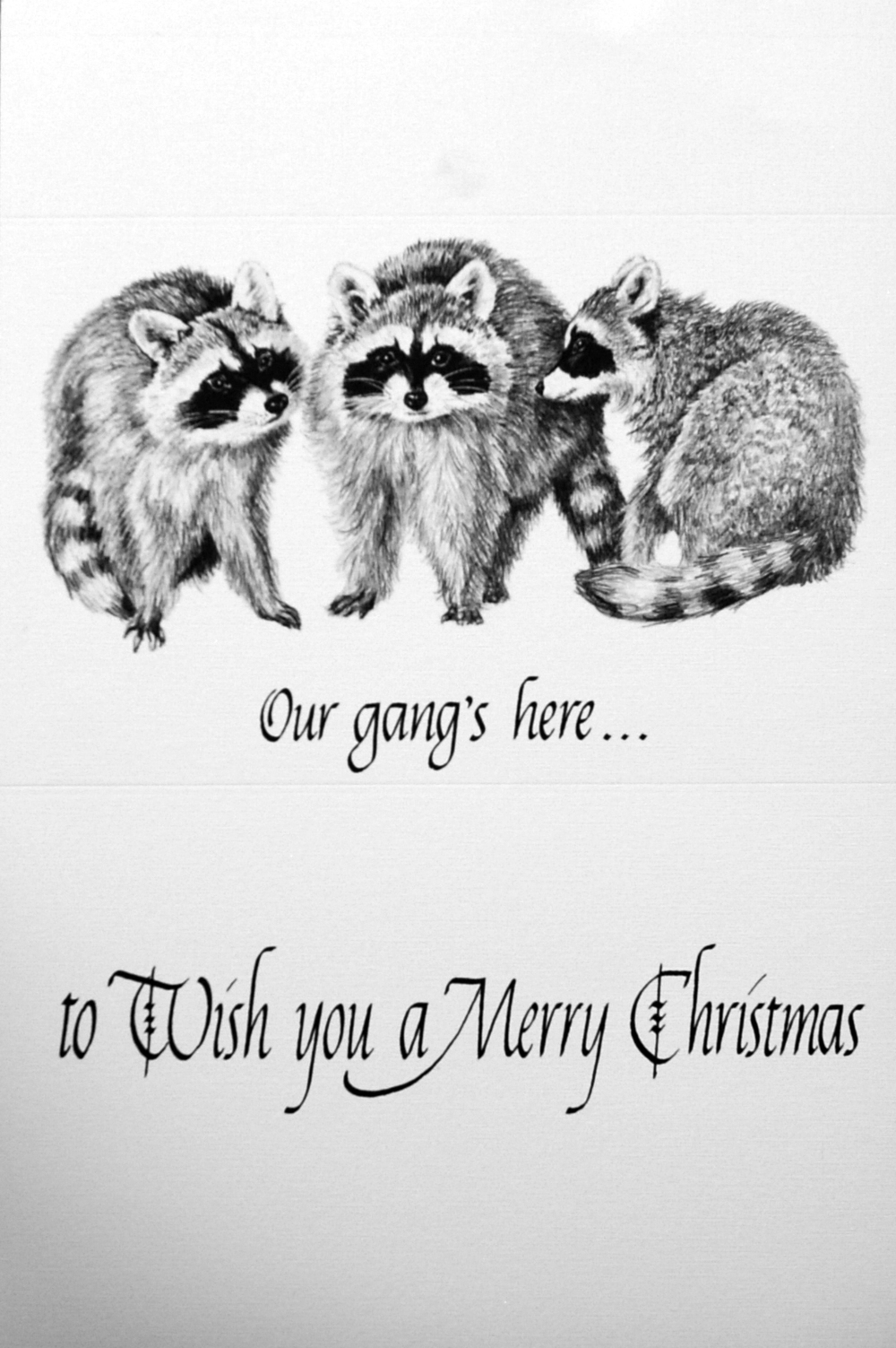 """Our gang's here...""    ""to Wish you a Merry Christmas""    ( Raccoons )"