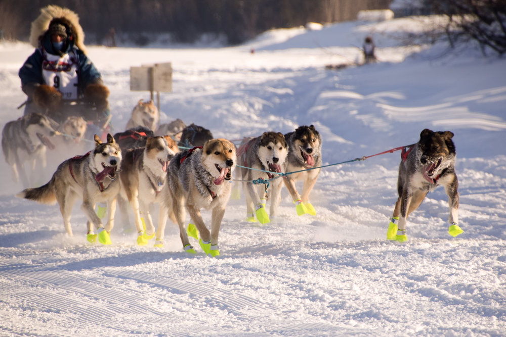Pictured is Canadian Musher Michelle Phillips and her team. Last I checked she's in the top 10 and still has already completed her 8 hour break so she still has a good chance of getting ahead.