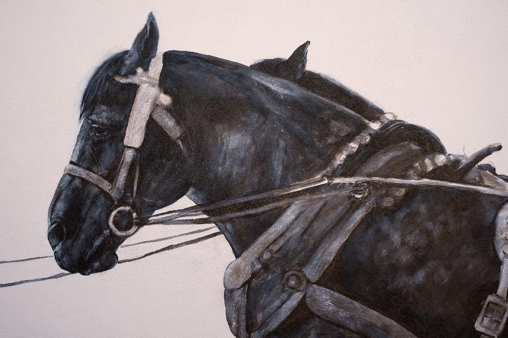 Detail shots of horses