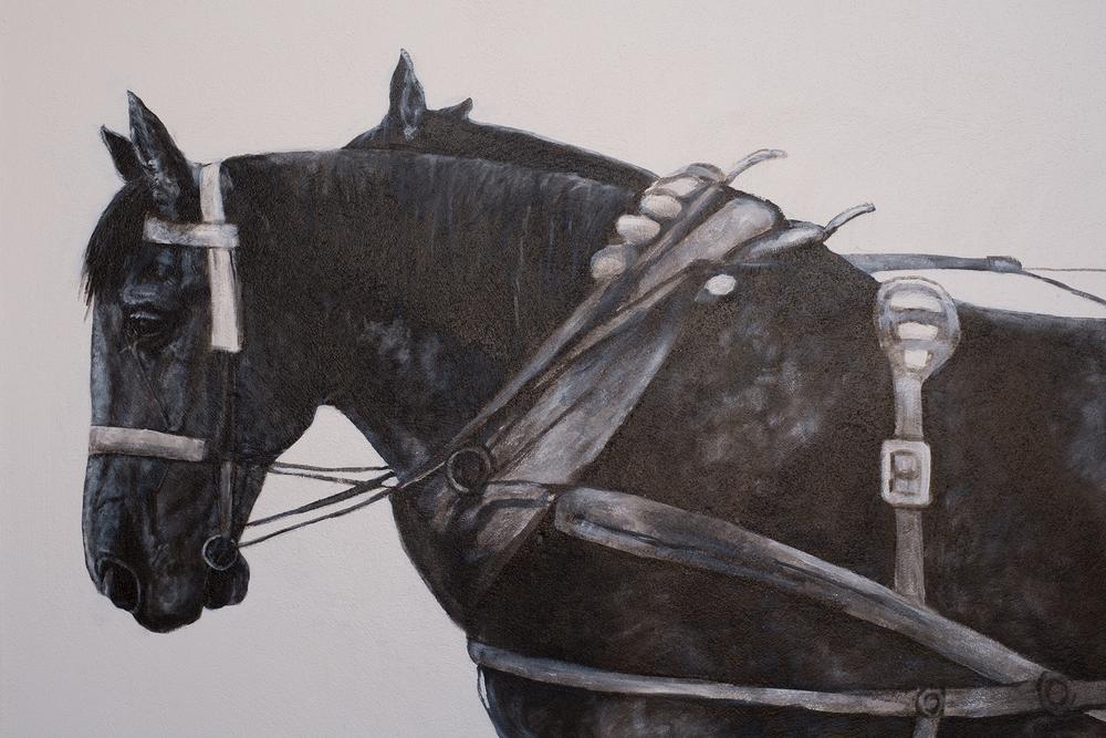 Horse detail #1