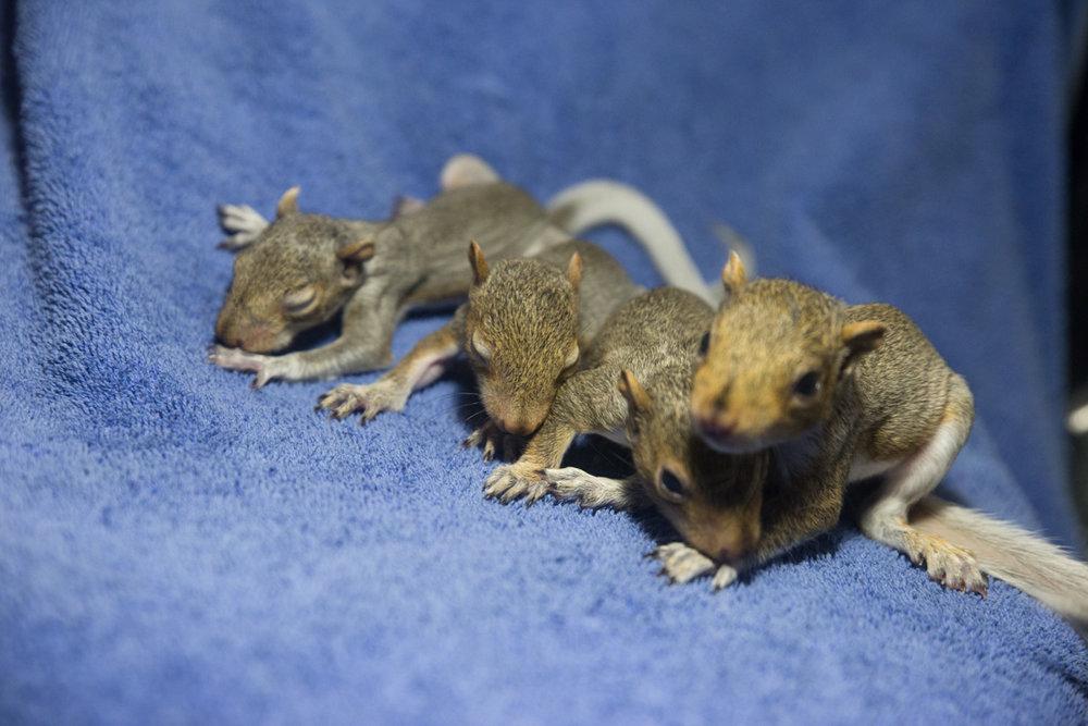 PileOSquirrels-8516.jpg