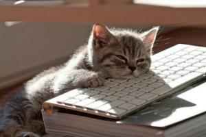 cat-sleeping-on-keyboard