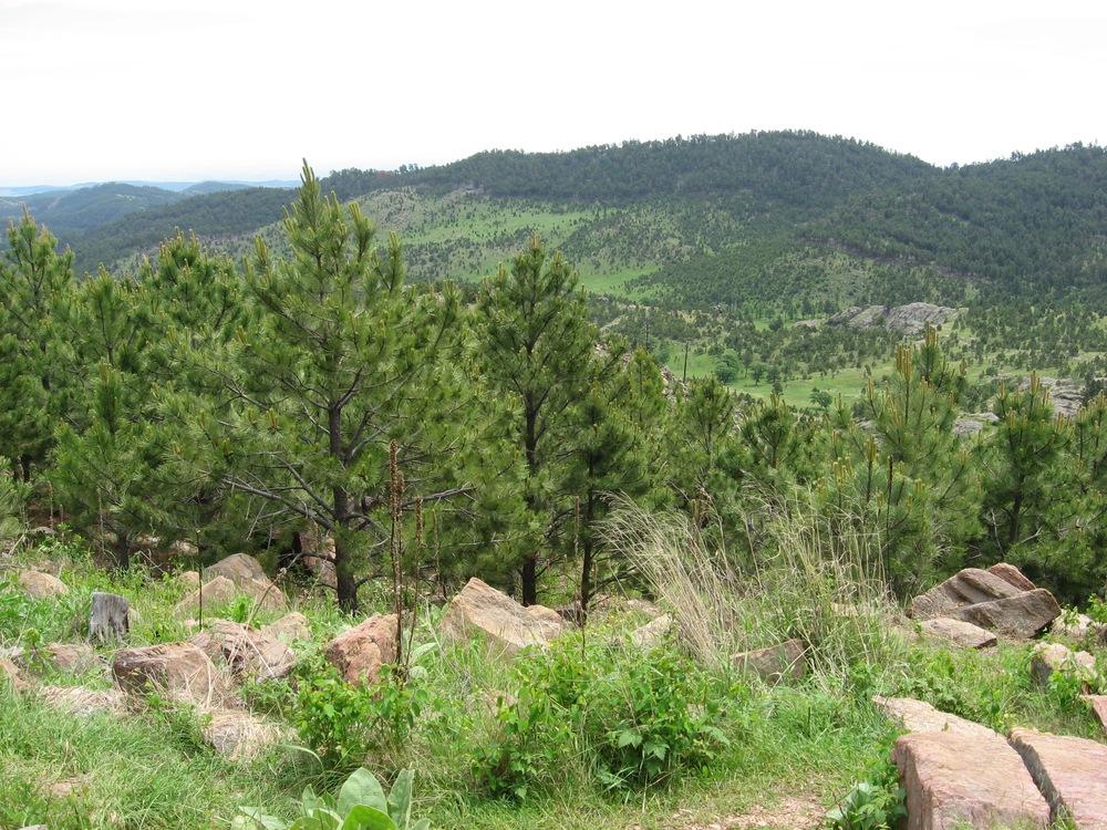 Climbing the Black Hills