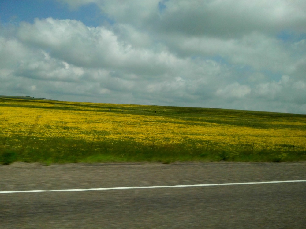 Nebraska Fields of Gold