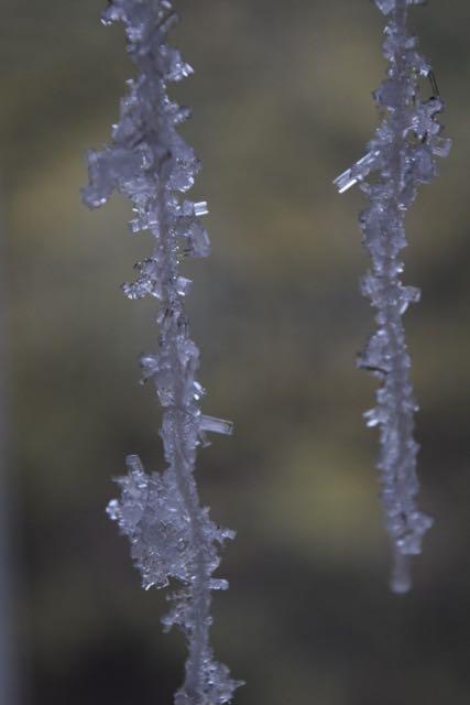 Growing Salt Crystals