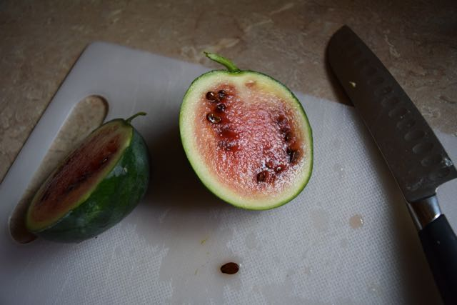 We grew a watermelon.