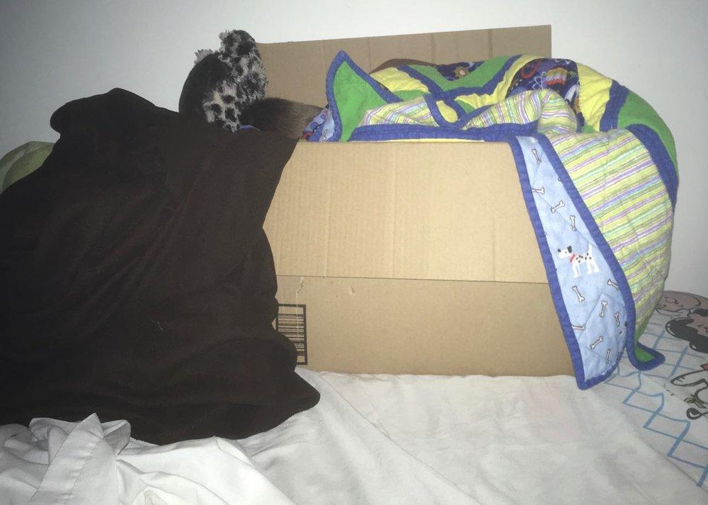 Tad-in-a-Box