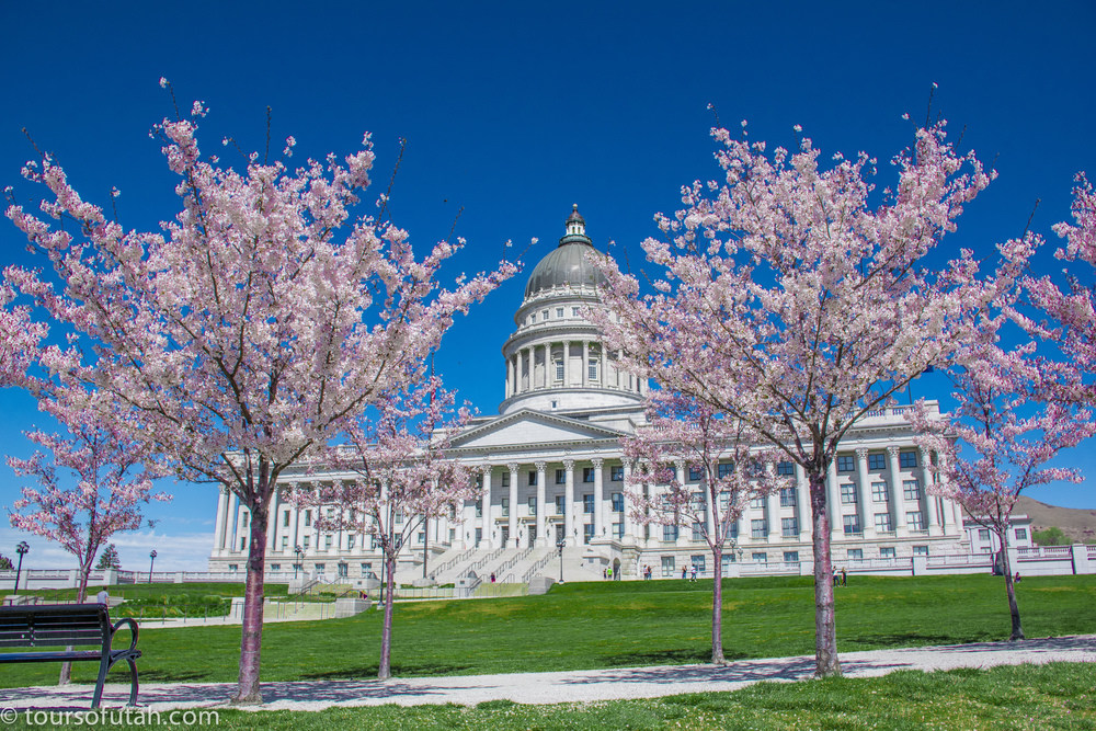 Utah Capitol cherry tree blossoms of Salt Lake City Tours