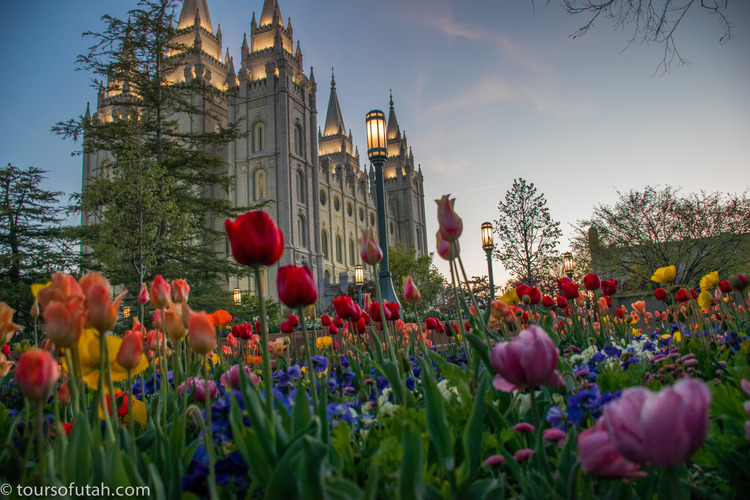 Spring flowers on temple square sightseeing tour salt lake city flower garden temple square tour mightylinksfo