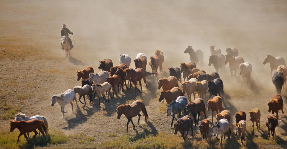 Mongolia03.jpg