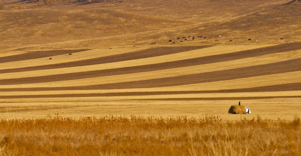 Mongolia06.jpg