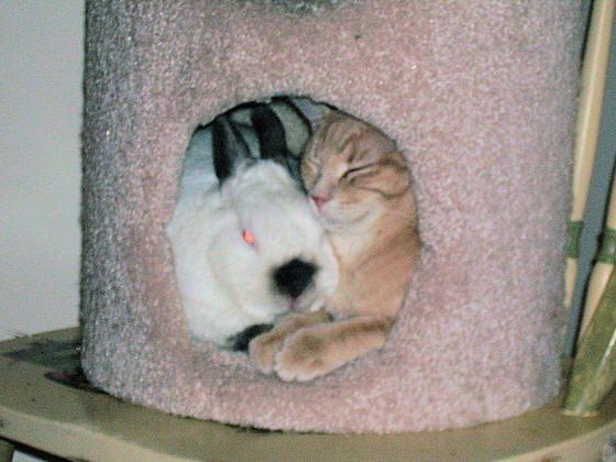 bunny_cat