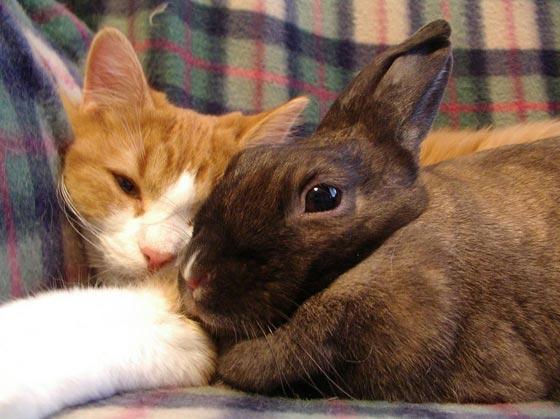 cat-bunny