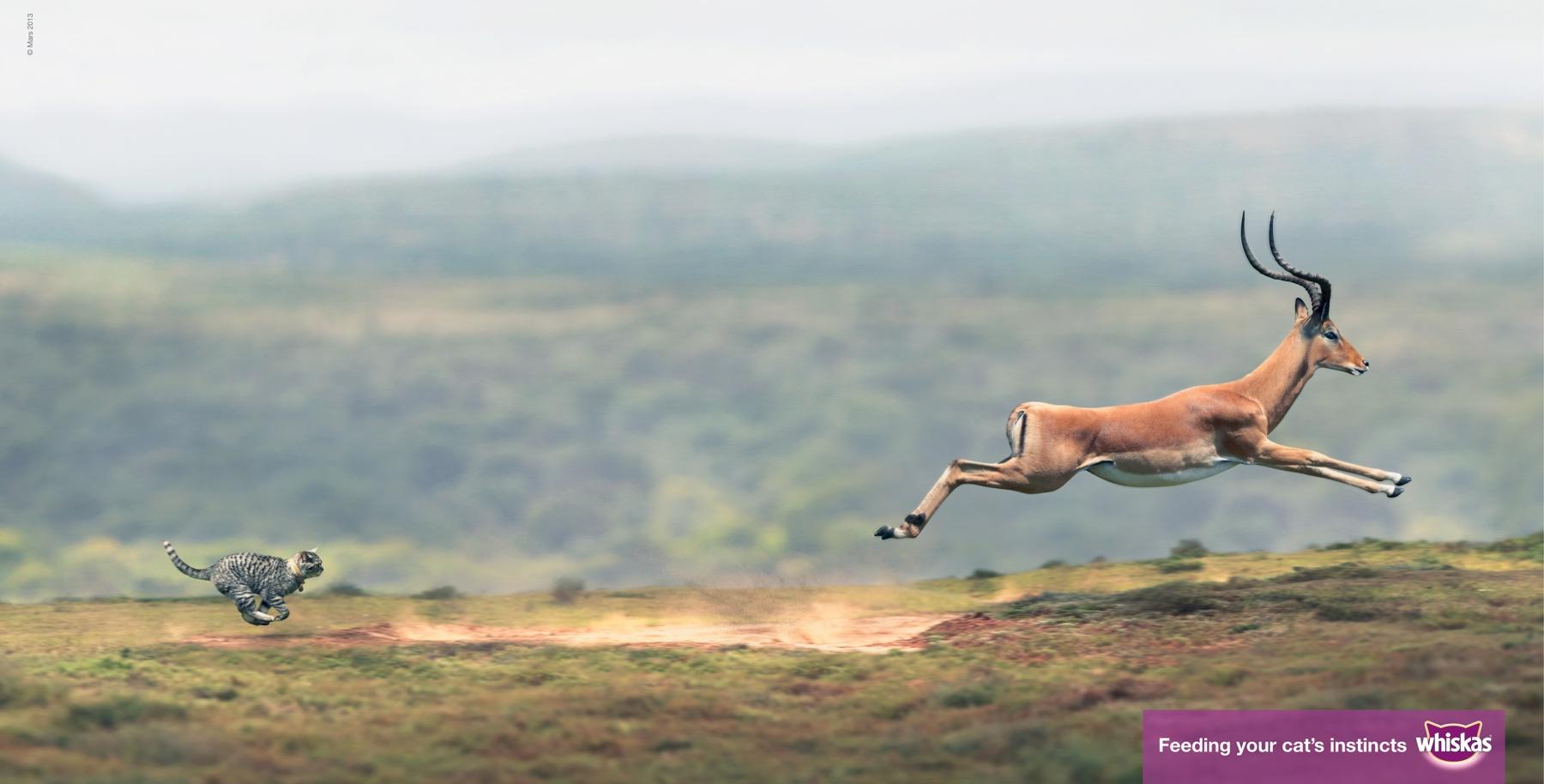antelope_aotw