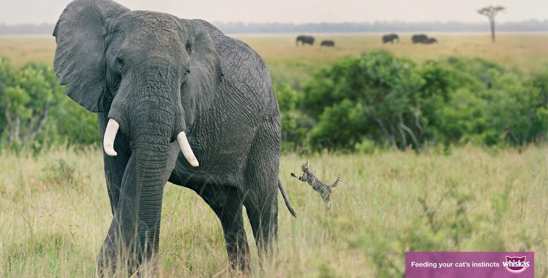 elephant_aotw_0