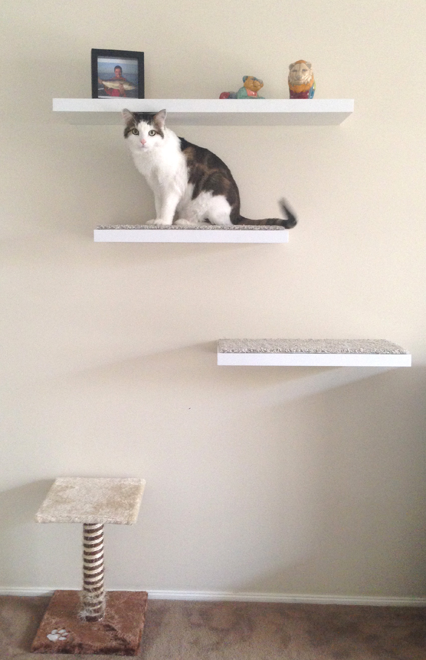Floating Cat Shelves 28 Images Cat Perch Shelf Wave
