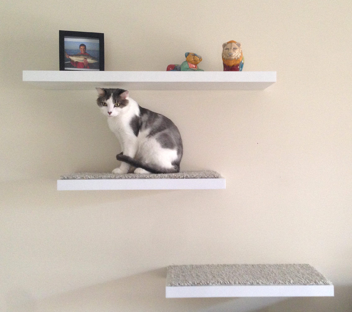 Diy Floating Cat Shelves African Cat Project
