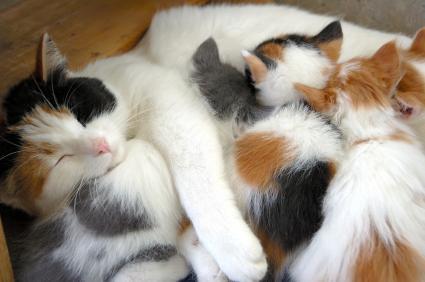 kittensnursing