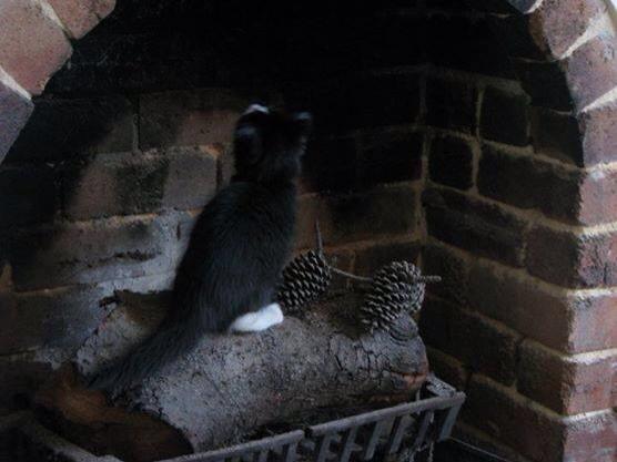 Macy as a kitten - constantly seeking mischief