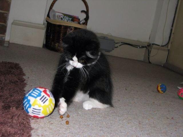 Little Macy as a kitten