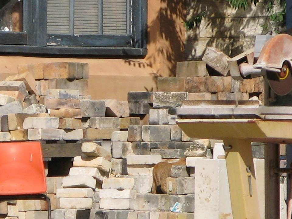 Spot the kitty! One of Mum's kittens trying to remain elusive amongst the kiln bricks. Photo courtesy of Jia-haur Liang