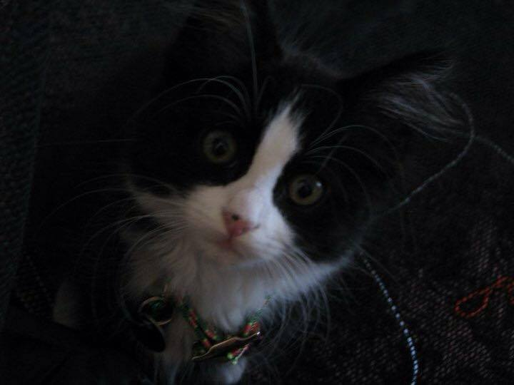 Feeling like a walk down memory lane, Macy as a little kitty. The cat that started it all.