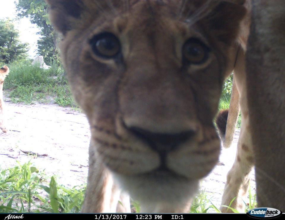 Image courtesy of Wildlife ACT Botswana