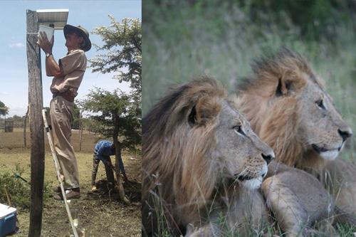 lion proj.jpg