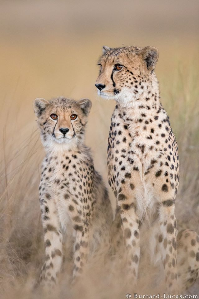 Photo by Will Burrard-Lucas