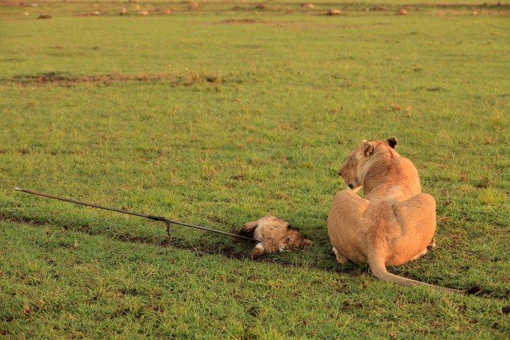 Photo via  Zawadi House Masai Mara