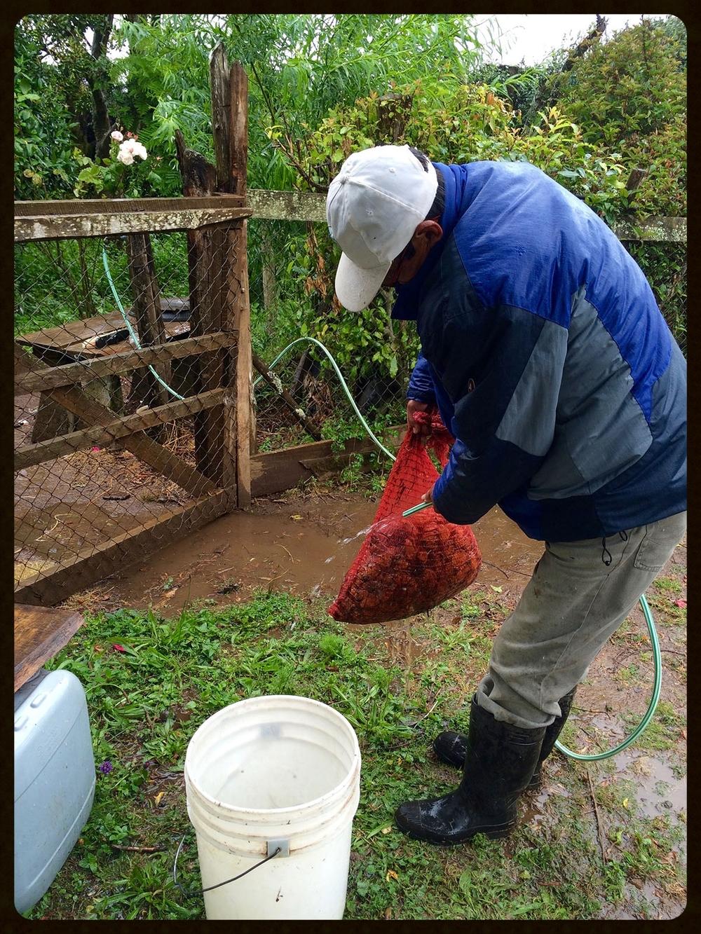 Water for Rinsing.jpg