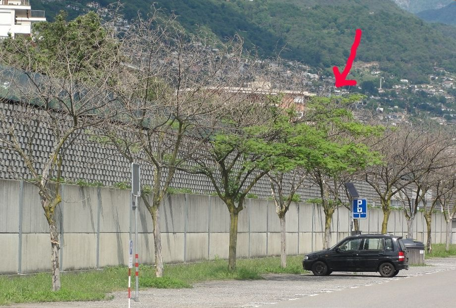 Locarno all ombra di alberi secchi i verdi del ticino - Alberi adatti per viali ...