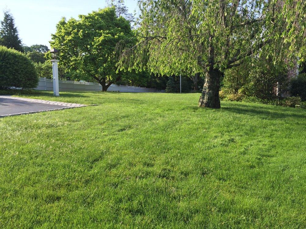 The Bartletts' Yard