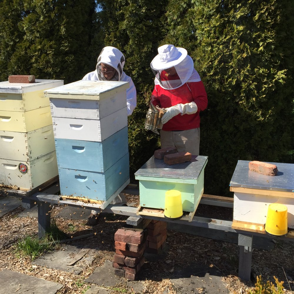 Beekeeping in the Peters' Yard