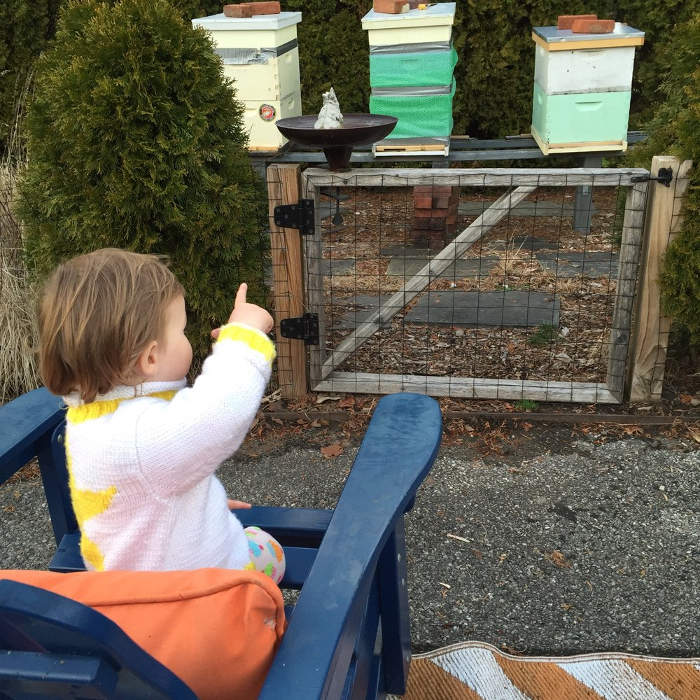 Enjoying the Bee Hives in the Peters' Yard