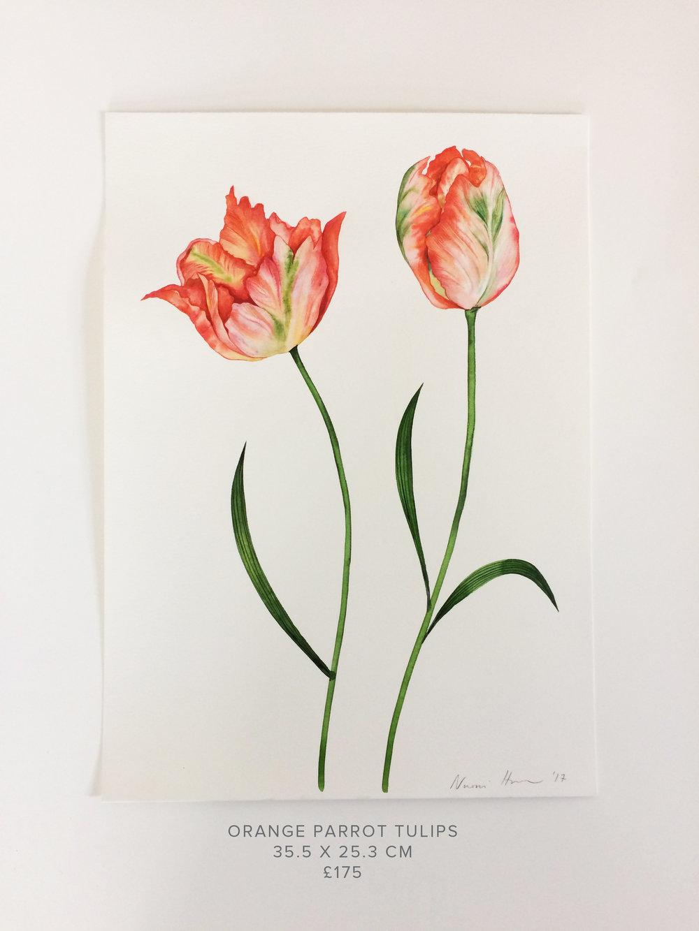 Orange Parrot Tulips.jpg