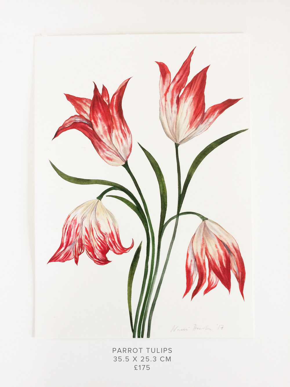 Parrot Tulips PS.jpg