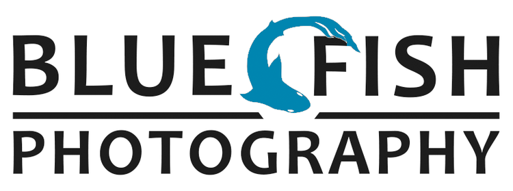 BlueFish Photography