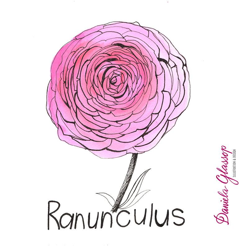 InktoberCB-Day10-Ranunculus-DanielaGlassop.JPG