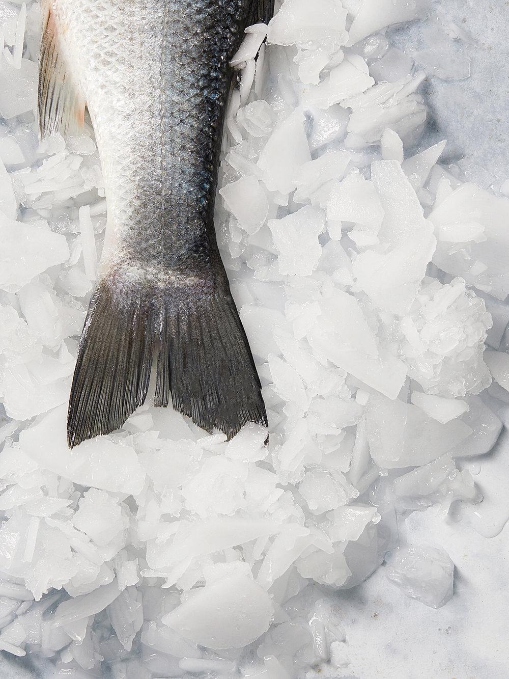 Fish73801.jpg