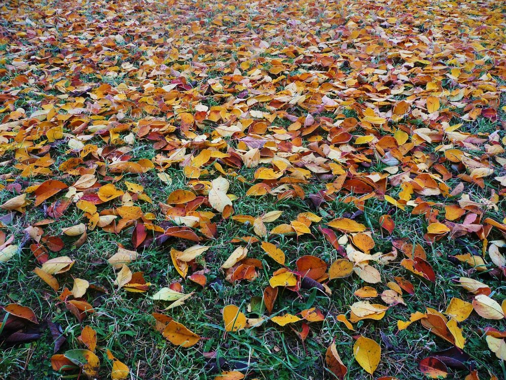 leaves on ground.jpeg