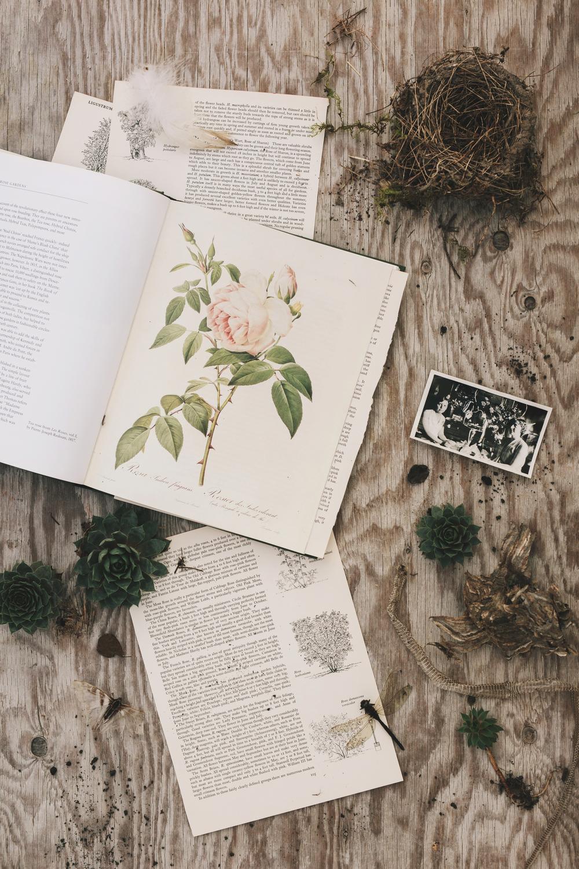 flower books