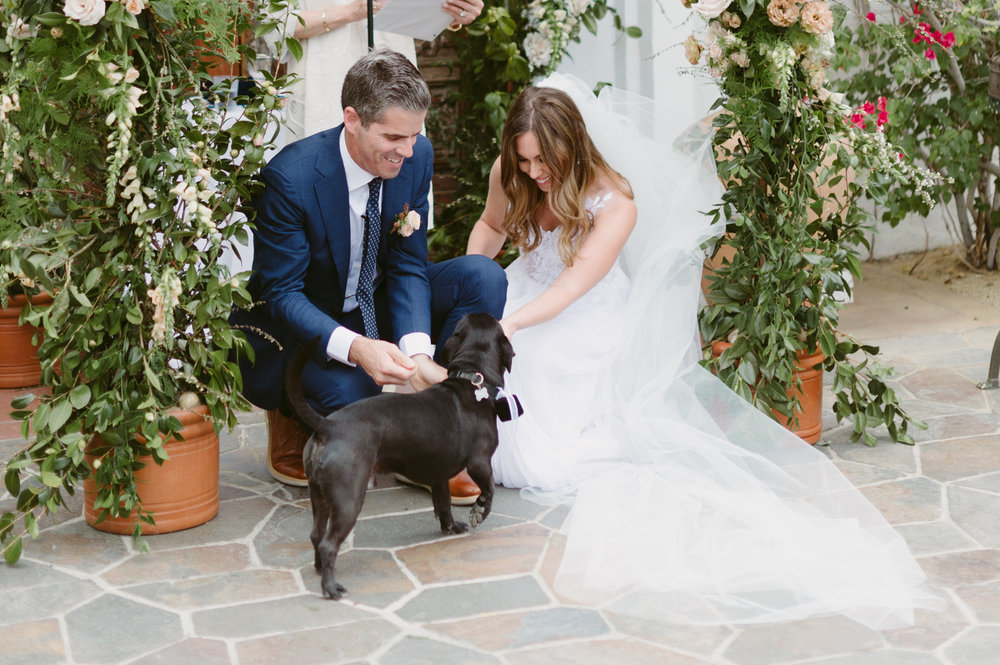 dog as the ring bearer
