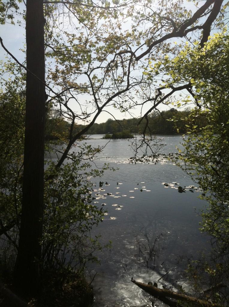 Rockwood Park pond