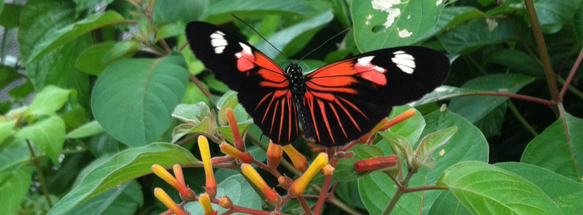 Butterflies Live at Lewis Ginter