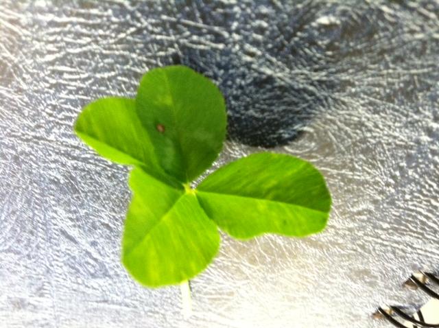 4-leave clover, Bedford, Va.