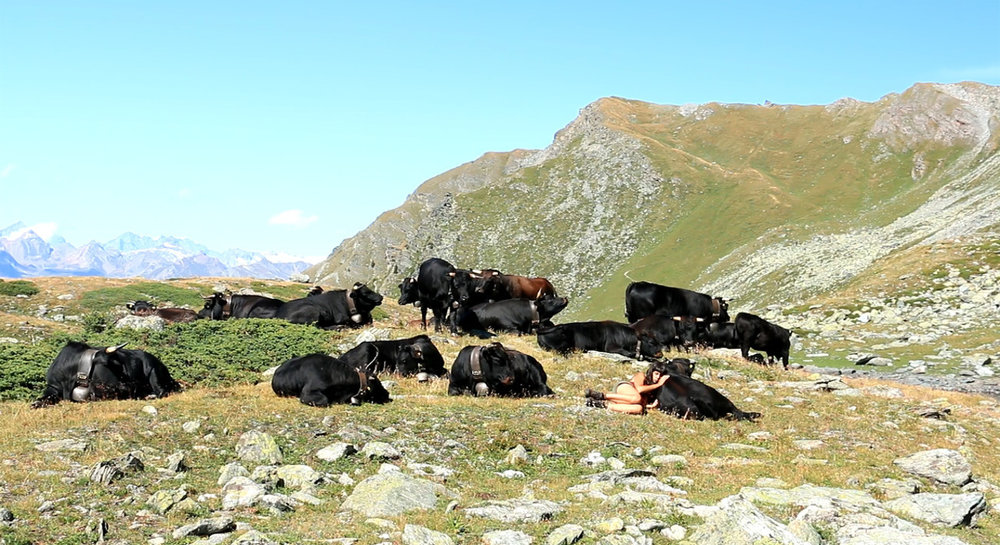 Photo 1 Cows_and_Queens_I.jpg