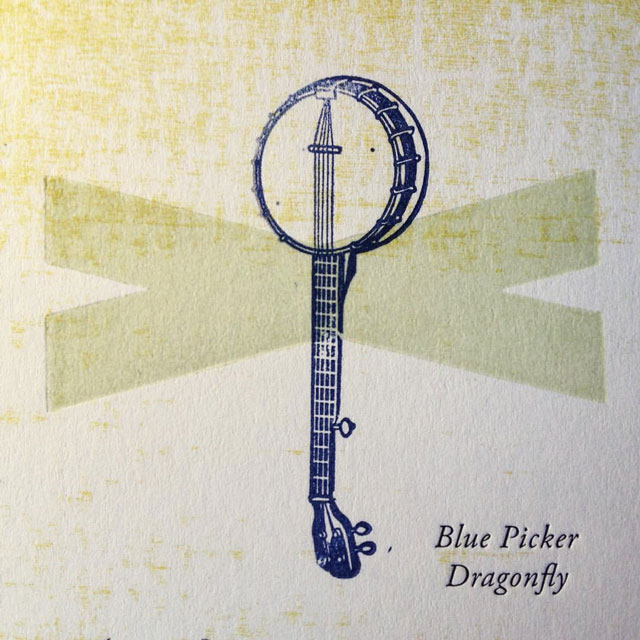 Blue Picker Dragonfly (detail)