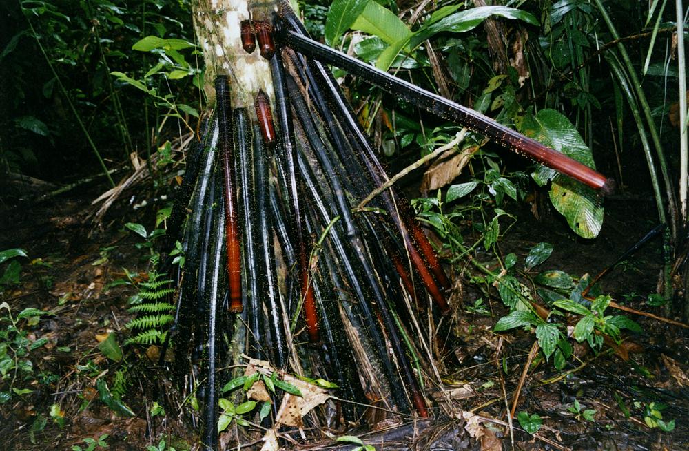 Palo Hombre, Parque Nacional Madidi 2004